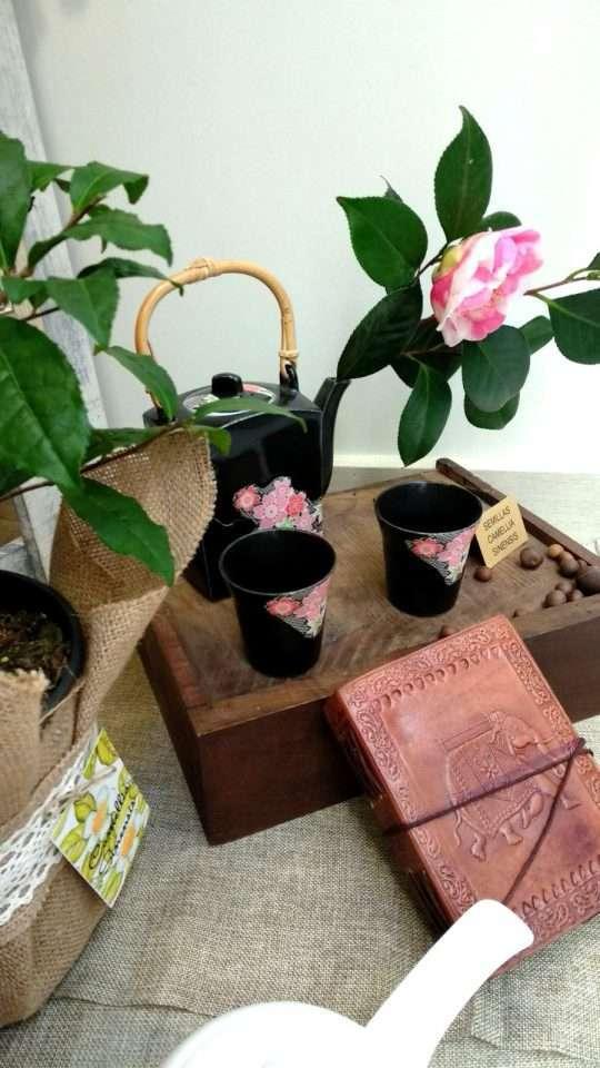 Semillas de Camellia Sinensis