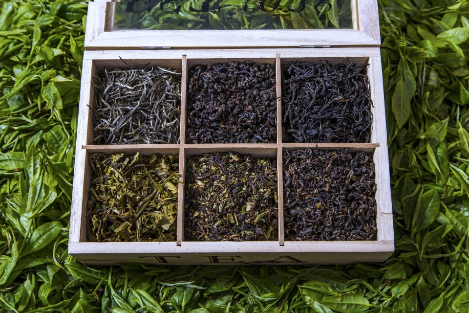 Nilgiri Teas - Tea Studio