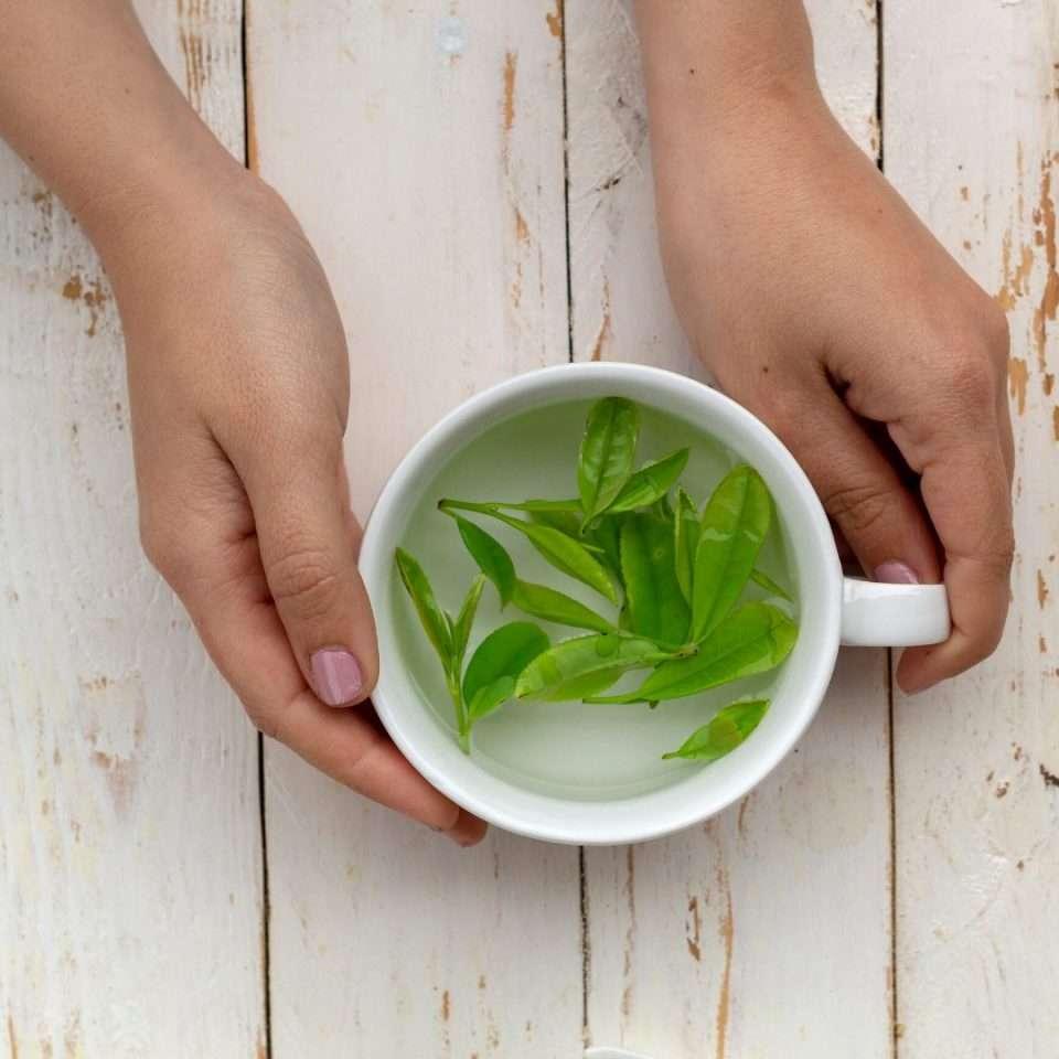 un té natural recién cosechado en galicia