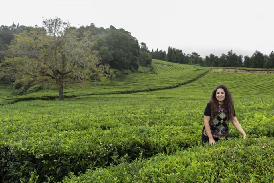 sumiller de té en galicia