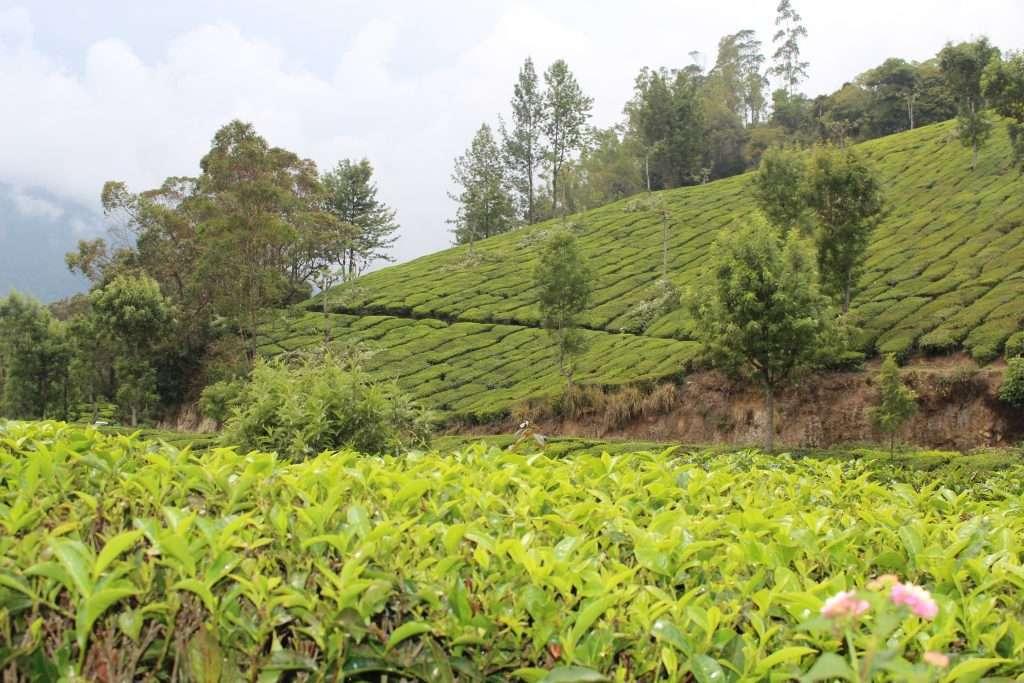 té y mindfulness con meditacion guiada